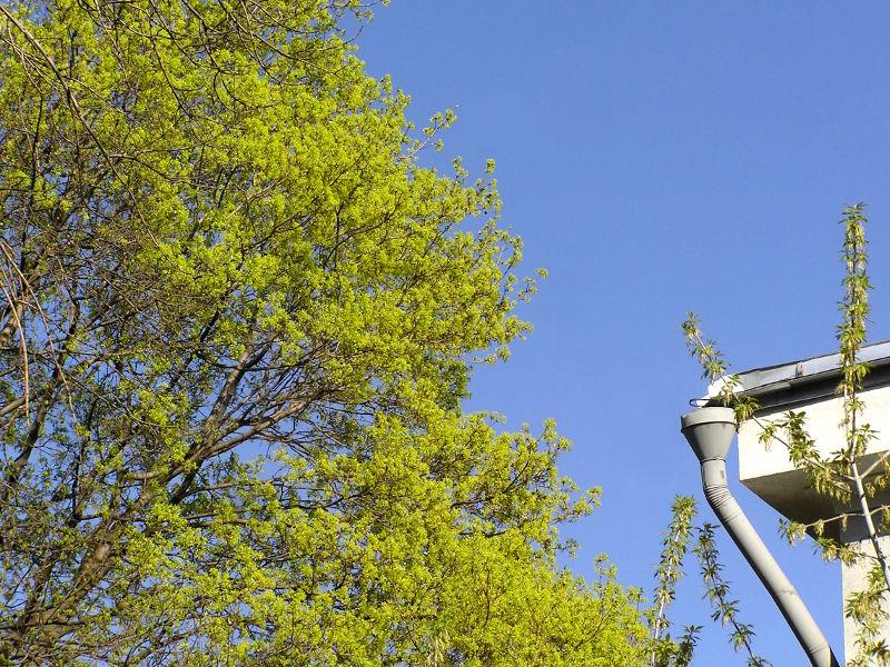 Какие деревья расцветают весной. Клуб почемучек. Как весной просыпаются деревья