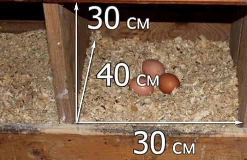 Гнезда для куриц чтобы не ели яйца