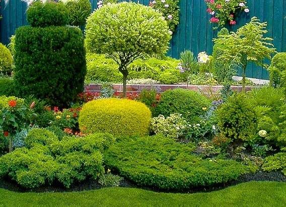 Красивые деревья для ландшафтного дизайна
