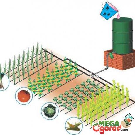 Как правильно разбить огород схемы. Что посадить в огороде и как правильно: лучшие советы и рекомендации