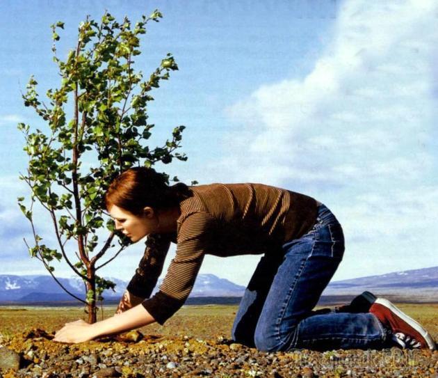 Совместимость садовых деревьев и кустарников таблица